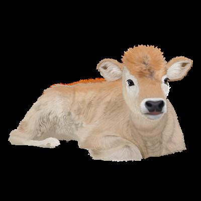 Minden, amit a borjú- és marhahúsról tudni kell